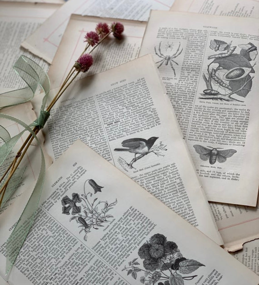 1879 - Nature, Birds, Flowers, Botany, Antiquarian Encyclopedia Art for Journaling/ Scrapbooking