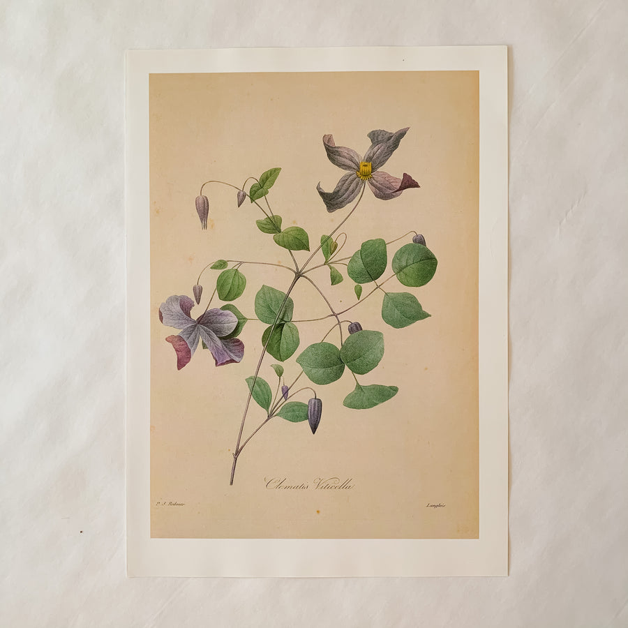 Pair of Purple Floral Botanical Prints, Original Prints, Book Plates