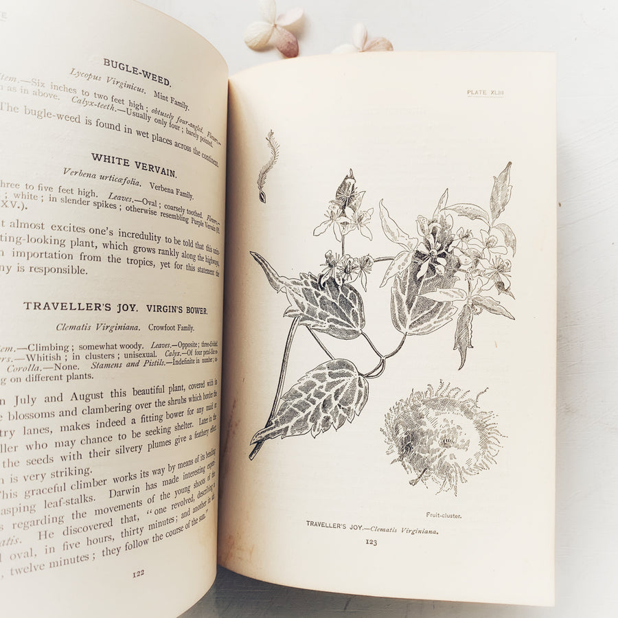 1898 - How to Know The Wild Flowers