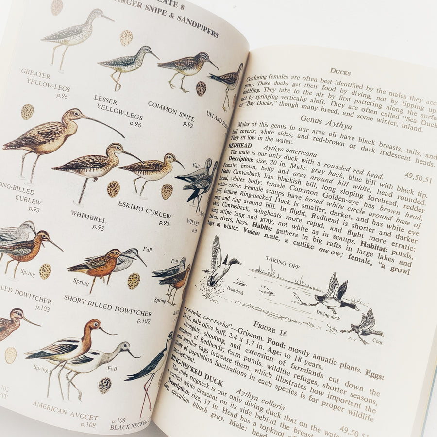 1959 - Complete Field Guide To American Wildlife