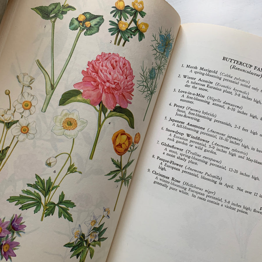 1958, The Guide to Garden Flowers; Their Identity and Culture