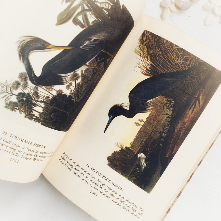 1950 - Audubon's Birds of America