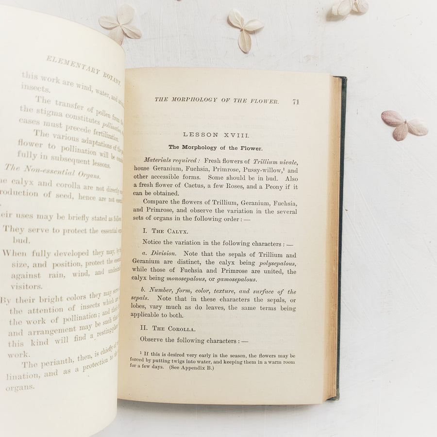 1896 - Lessons in Elementary Botany