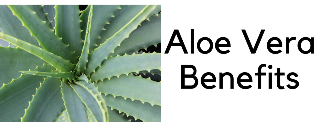 The Benefits of Aloe Vera in Skincare
