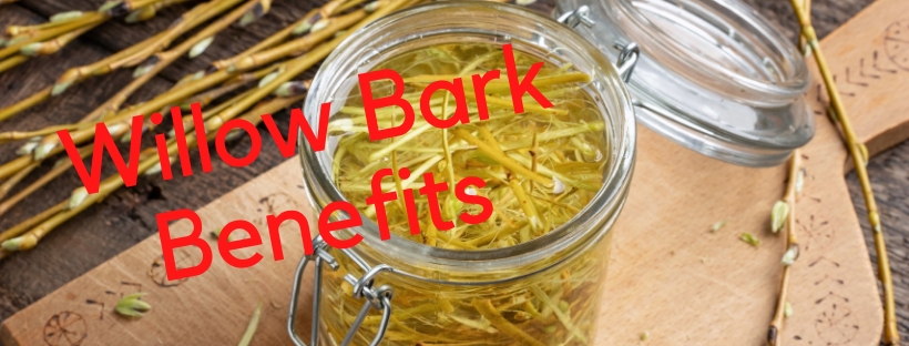 Benefits of Black Willow Bark In Skincare