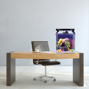The Best Desktop Aquariums