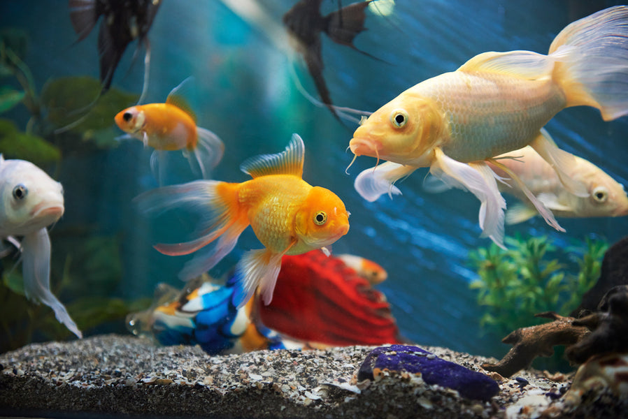 Cloudy Water in Fish Tank - Causes & Solutions
