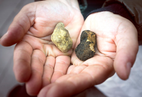 comparing white truffle and black truffle