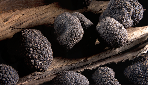 Strong pungent aroma are the feature of Spanish Black truffle