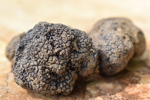 It needs long time to grow a truffles