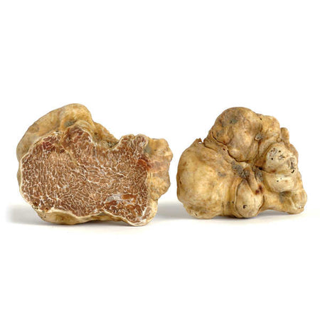 FRESH WHITE TRUFFLE (piece size over 100g )