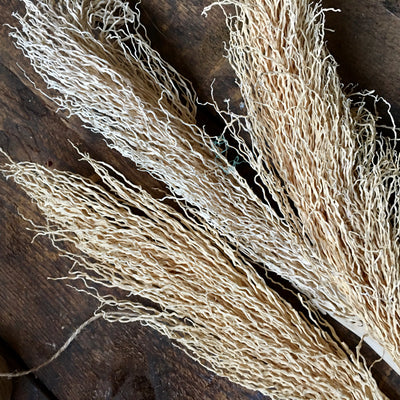 Dried Palm Twizzles - White/Natural