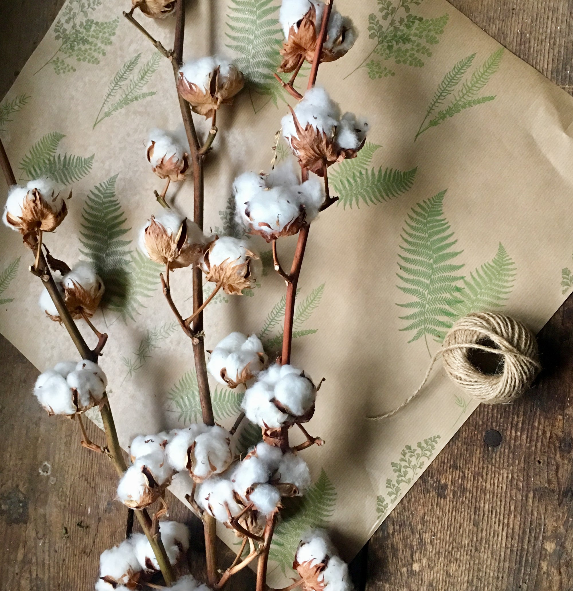 Dried Natural Cotton Stems Smoked Birch