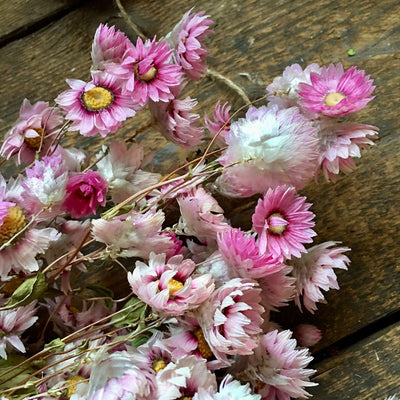 Dried Pink Daisy Flower