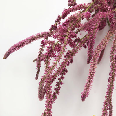 Natural Pink Dried Statice Suworowii