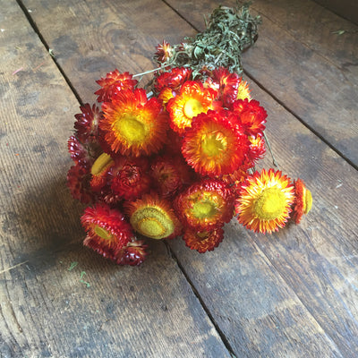 Dried Red / Yellow Helichrysum
