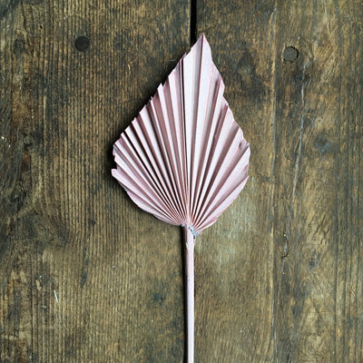 Dried Palm Spear - Pink Stem
