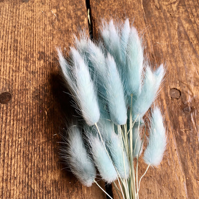 Bunny Tails Grass - Pale Blue