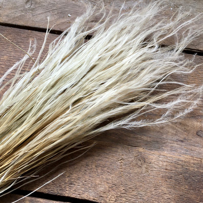 Stipa Pennata Fluffy Grass - Natural