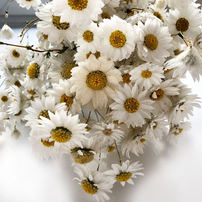 White Daisy Flower - Dried