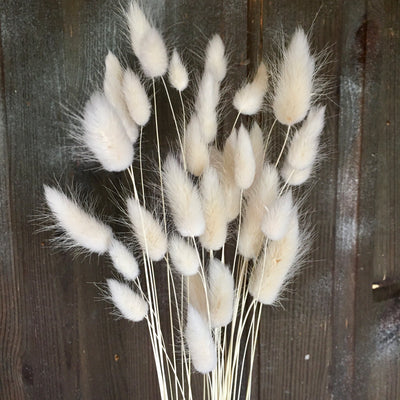 Bunny Tails Grass - White