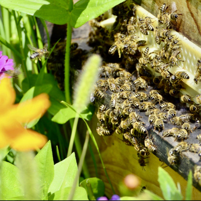 Benefits of keeping honey bees