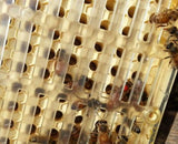 "Queen Rearing ""NICOT-30"" System output queen bees Set"