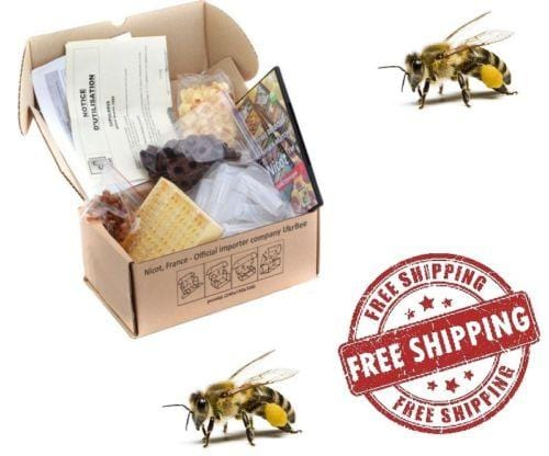 "Queen Bee Rearing Kit ""NICOT-30"" - Beebox2u"
