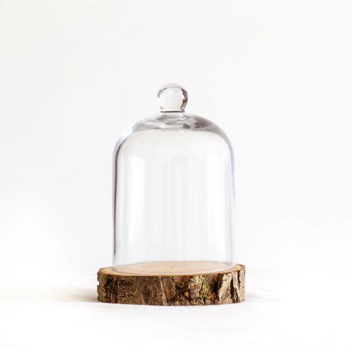 Rebecca Tracey - Glass Cloche & Rustic Wood Base