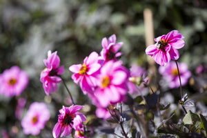 How to be a Gardener - April 2019 - Course