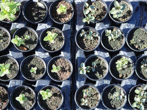 Propagation Masterclass March 2019