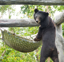 Load image into Gallery viewer, Bear Hammock donation