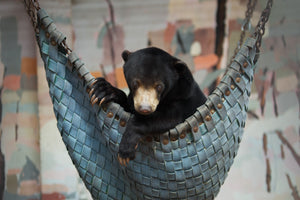 Bear Hammock donation