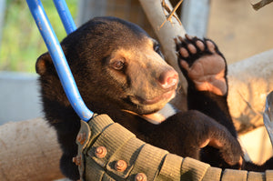 #BearsAboutTheHouse #MaryTheSunBear #FreetheBears #BeABearCarer