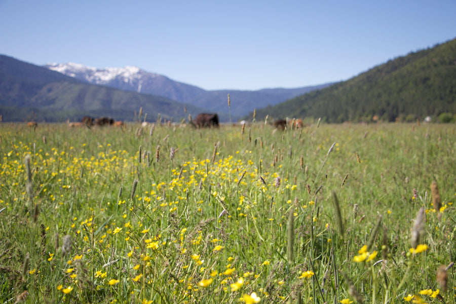 Grass Fed & Finished: A Look at Grass Fed Meat, What it Means & Why It's Better