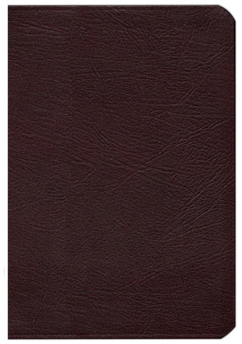 NIV Zondervan Study Bible Burgundy Bonded Leather