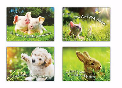 Boxed Cards - Fur Baby Love - Encouragement