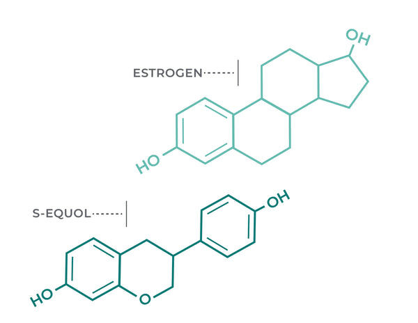 Estrogen and S-Equol