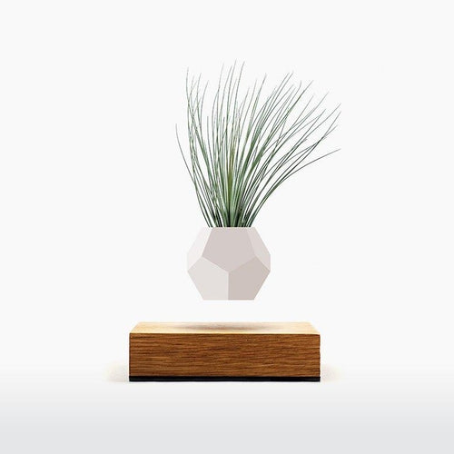 Floating Planter by Lyfe