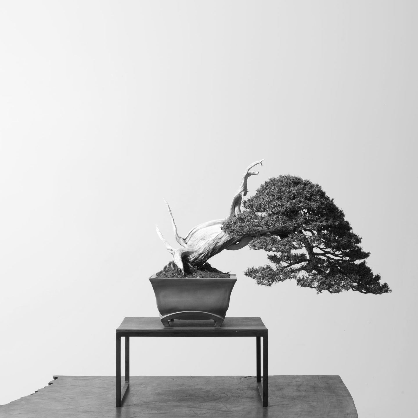 Bonsai Goods
