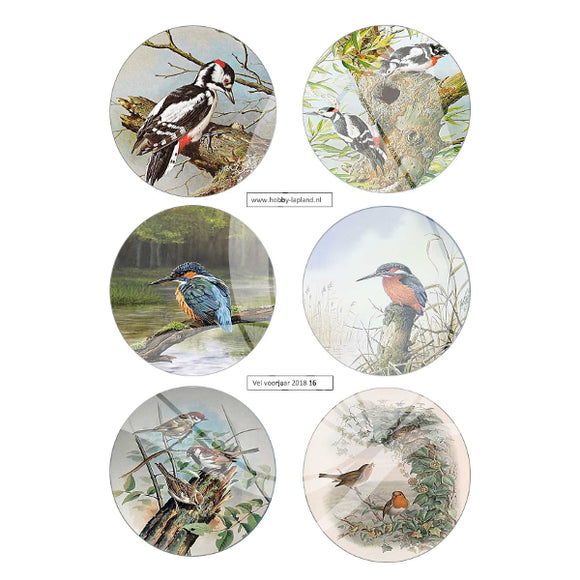 Kingfisher & Woodpecker Topper Sheet
