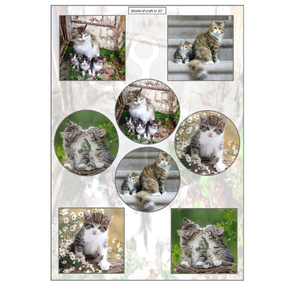 Pearlescent Cats & Kittens Topper Sheet