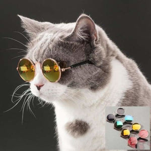 Sunglasses for Cats - Dog Accessories