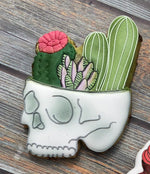 Skull with Succulents