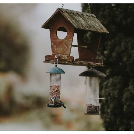Where to Hang Your Bird Feeder