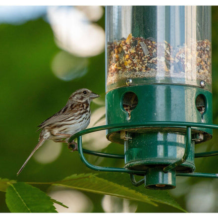 8 Best Squirrel Proof Bird Feeders (Ultimate Review List)
