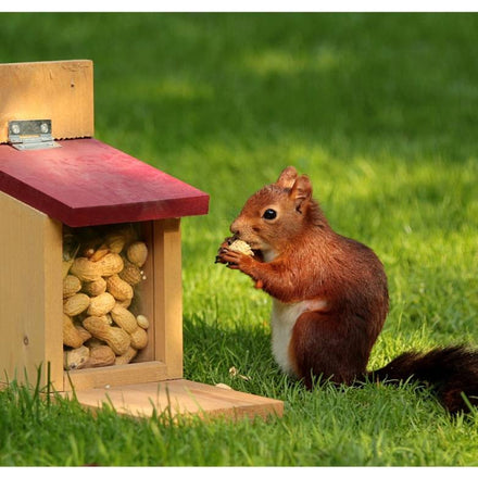 9 Best Squirrel Feeders (Ultimate Review List)