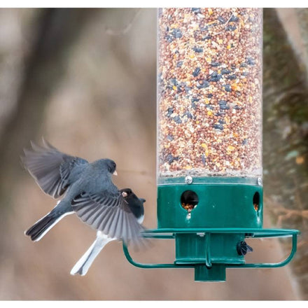 What's the Best Food to Put in Bird Feeders?