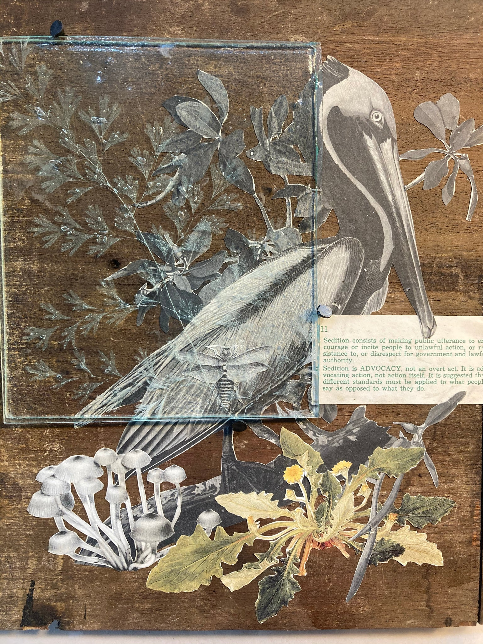 Pelican and Maidenhair Fern, Pandemic Collage Collection