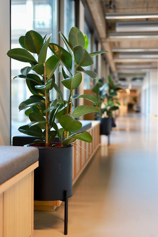 forest amsterdam styling plants offices amsterdam